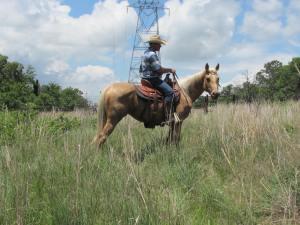 Oklahoma Trail Horse