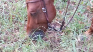 Grazing Your Horse On The Trail